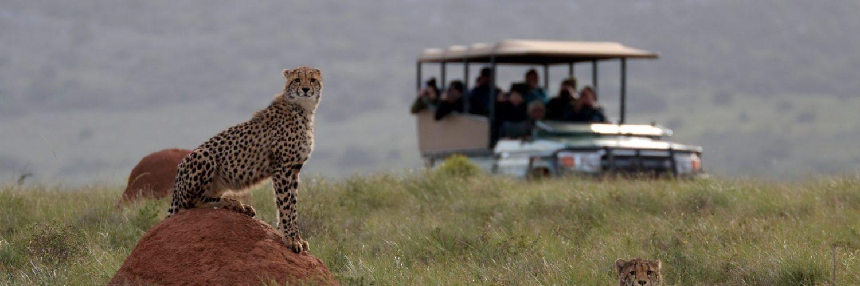 Lion Roars Hotels & Lodges